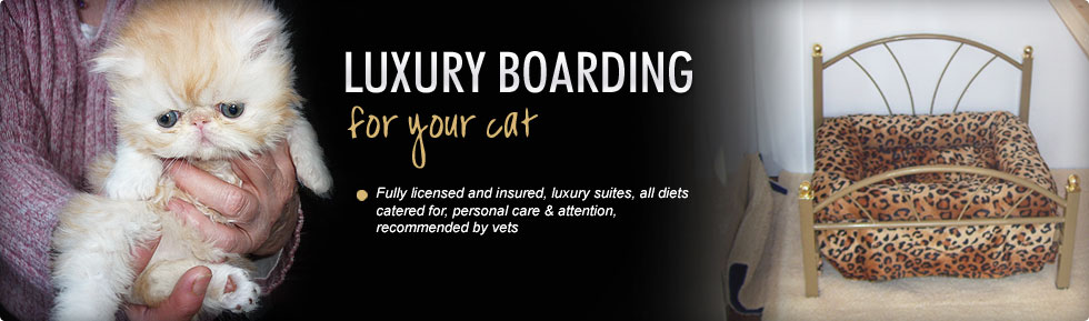 Fully licensed and insured, luxury suites, all diets catered for, personal care & attention, recommended by vets